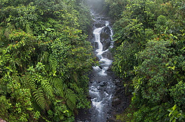 Cascading river in cloud forest, Cayambe Coca Ecological Reserve, Ecuador  -  Murray Cooper