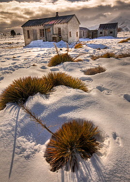 Abandoned farm house, central Otago, New Zealand  -  Colin Monteath/ Hedgehog House