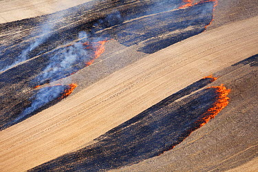 Fire in dry season burning agricultural fields, Western Cape, South Africa  -  Richard Du Toit