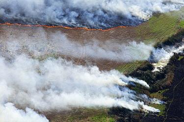 Fire in dry season, Western Cape, South Africa  -  Richard Du Toit