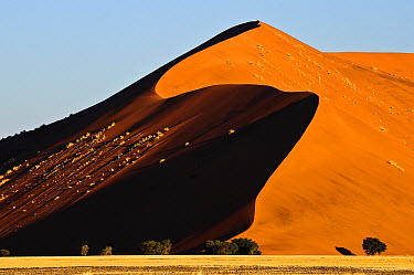 Sand dune, Namib Desert, Namibia  -  Sergey Gorshkov