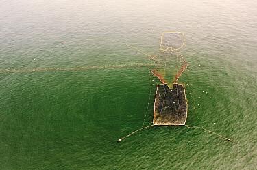 Sockeye Salmon (Oncorhynchus nerka) aquafarm, Kamchatka, Russia  -  Sergey Gorshkov