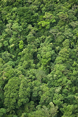 Atlantic rainforest below Sugarloaf Mountain, Rio de Janeiro, Brazil  -  Pete Oxford