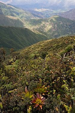 Highlands transition zone, Podocarpus National Park, Ecuador  -  Pete Oxford