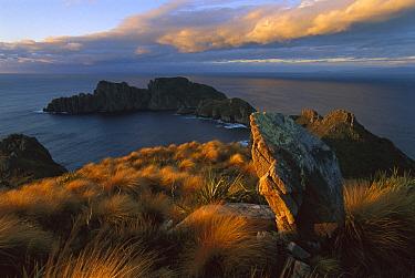 Rock island off of coast, Rakiura National Park, New Zealand  -  Rob Brown/ Hedgehog House