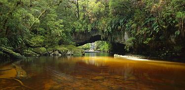 Moria Gate Arch, Oparara Valley, Kahurangi National Park, New Zealand  -  Rob Brown/ Hedgehog House