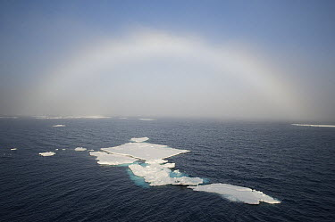 Fogbow over ice floes, Svalbard, Norway  -  Kevin Schafer