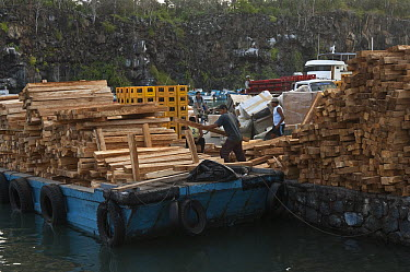 Loading timber on the dock for export to the mainland, Puerto Ayora, Santa Cruz Island, Galapagos Islands, Ecuador  -  Pete Oxford