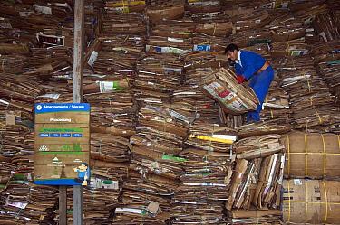 Cardboard recycling with worker, Santa Cruz Island, Galapagos Islands, Ecuador  -  Pete Oxford