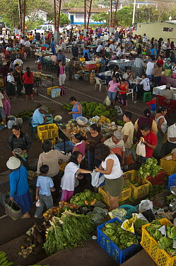Produce market where most goods are brought in by ship from the mainland, Puerto Ayora, Santa Cruz Island, Galapagos Islands, Ecuador  -  Pete Oxford