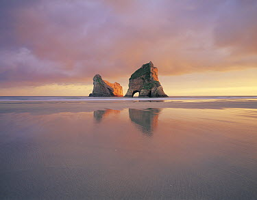 Wharariki Beach with natural arch, Golden Bay, New Zealand  -  Rob Brown/ Hedgehog House