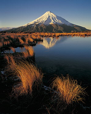 Mount Taranaki reflected in pond on Pouakai Range, New Zealand  -  Rob Brown/ Hedgehog House