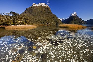 Salt tolerant sedges and grass in tidal zone and Mitre Peak, Milford Sound, Fjordland National Park, New Zealand  -  Colin Monteath/ Hedgehog House