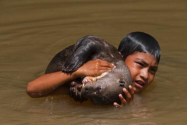 Giant River Otter (Pteronura brasiliensis) playing with Macushi boy, Karanambu Trust for re-introduction, Rupununi, Guyana  -  Pete Oxford