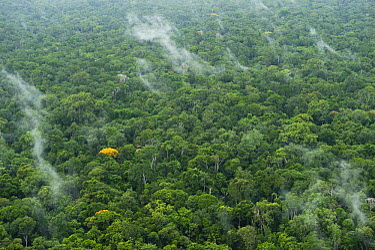 Rainforest, Iwokrama Rainforest Reserve, Guyana  -  Pete Oxford