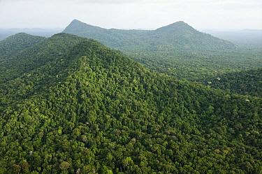 Rainforest and Kanuku Mountains, Upper Takutu-Upper Essequibo, Guyana  -  Pete Oxford