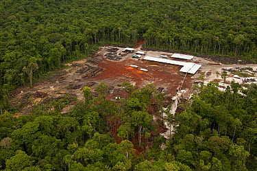 Low impact logging in rainforest, Iwokrama Rainforest Reserve, Guyana  -  Pete Oxford