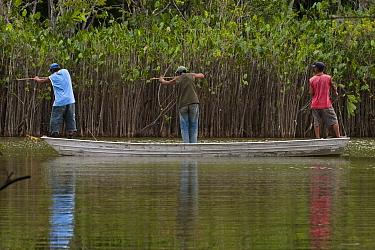 Arapaima (Arapaima gigas) being targeted by fisherman, Rupununi, Guyana  -  Pete Oxford