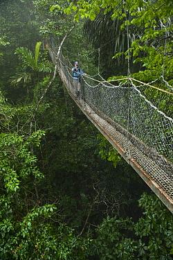 Tourist on canopy walkway, Atta Lodge, Iwokrama Rainforest Reserve, Guyana  -  Pete Oxford