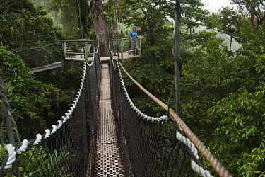 Tourists on canopy walkway, Atta Lodge, Iwokrama Rainforest Reserve, Guyana  -  Pete Oxford