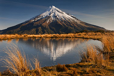 Mount Taranaki reflected in small tarn on slopes of Pouakai Range, New Zealand  -  Colin Monteath/ Hedgehog House