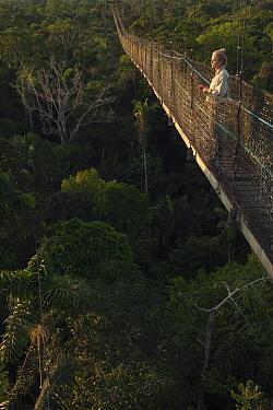 Tourist on canopy walkway at Sacha Lodge, Napo River, Yasuni National Park, Amazon, Ecuador  -  Pete Oxford