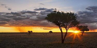 Sunset over plains, Khutse Game Reserve, Botswana  -  Vincent Grafhorst