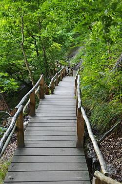 Wooden stairs, Jasmund National Park, Mecklenburg Vorpommern, Germany  -  Willi Rolfes/ NIS