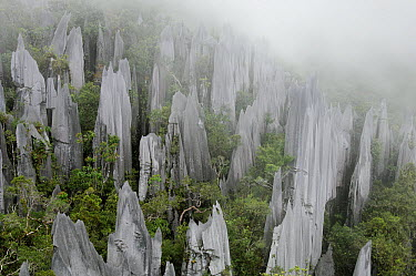 Limestone pinnacles on the upper slopes of Mount Api, Gunung Mulu National Park, Malaysia  -  Ch'ien Lee