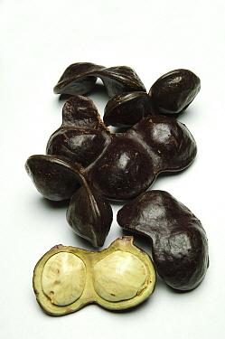 Jengkol (Archidendron jiringa) fruit used for various medicinal purposes, Kuching, Borneo, Malaysia  -  Ch'ien Lee