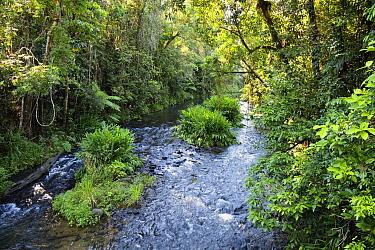 Henrietta Creek in rainforest, Atherton Tableland, Queensland, Australia  -  Konrad Wothe