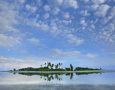 Virgin Island, Philippines  -  Tim Fitzharris