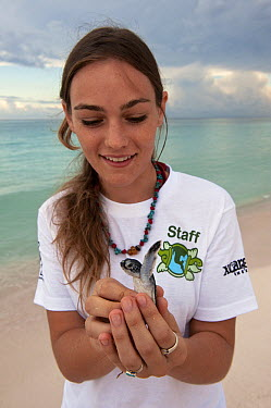 Green Sea Turtle (Chelonia mydas) hatchling held by volunteer Andrea de Landero taking part in hatchling release project, Quintana Roo, Mexico  -  Pete Oxford