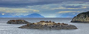 Steller's Sea Lion (Eumetopias jubatus) group hauled out near South Marble Island in Glacier Bay National Park, Alaska  -  Matthias Breiter