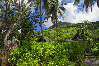 Rainforest edge with lodges in foreground, Silhouette Island, Seychelles  -  Stephen Dalton