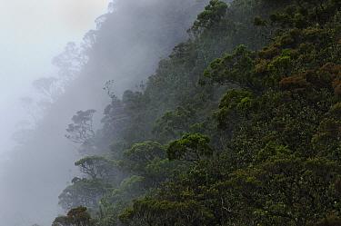 Mist enshrouds the upper montane forest at the summit of Mount Mulu, Gunung Mulu National Park, Sarawak, Borneo, Malaysia  -  Ch'ien Lee