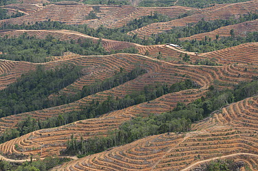 Lowland rainforest on hilly terrain is cleared and terraced for planting of oil palm, Keningau, Sabah, Borneo, Malaysia  -  Ch'ien Lee