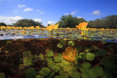 Flooded plain during rainy season, Pantanal, Mato Grosso do Sul, Brazil  -  Luciano Candisani