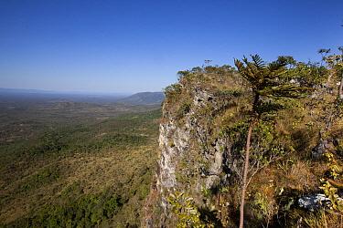 Cerrado ecosystem, Serra do Tombador, Goias State, Brazil  -  Luciano Candisani