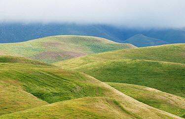 Grass-covered hills, Bakersfield, California  -  Kevin Schafer