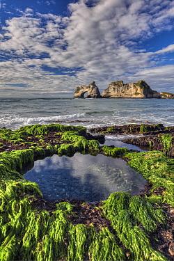 Tidepool in seaweed covered rocks, Archway Islands behind, Wharariki Beach near Collingwood, Golden Bay, New Zealand  -  Colin Monteath/ Hedgehog House