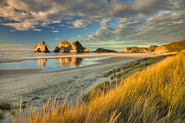 Evening light on sand dunes, Archway Islands in the distance, Wharariki Beach near Collingwood, Golden Bay, New Zealand  -  Colin Monteath/ Hedgehog House
