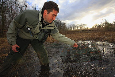 Environmental police removing illegal frog catching equipment, Jura, France  -  Cyril Ruoso