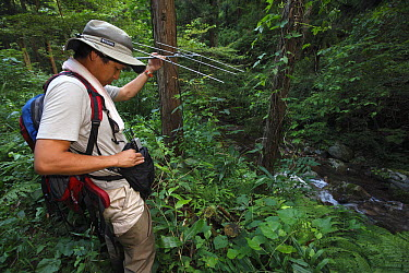 Japanese Giant Salamander (Andrias japonicus) biologist Sumio Okada tracking the movement of salamanders, Honshu, Japan  -  Cyril Ruoso