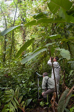 Birdwatchers in lowland tropical rainforest, Ecuador  -  Murray Cooper