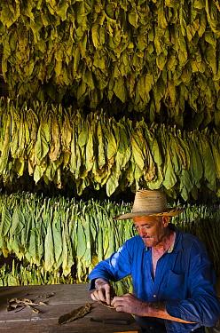 Tobacco (Nicotiana sp) farmer, Marcelino Gonzalez, rolling cigar, Vinales Valley, Sierra del Rosario, Pinar del Rio, Cuba - model released  -  Pete Oxford