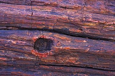 Petrified wood, Petrified Forest National Park, Arizona  -  Ingo Arndt