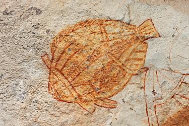 Aboriginal rock art of fish, Kakadu National Park, Australia  -  Ingo Arndt