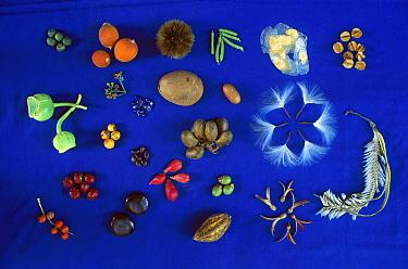 Seed diversity, Barro Colorado Island, Panama  -  Christian Ziegler