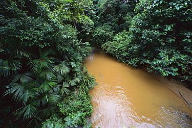 Sediment-loaded stream in deforested area, Barro Colorado Island, Panama  -  Christian Ziegler